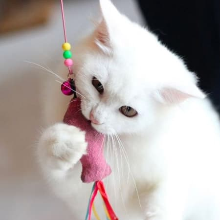cat chewing toy