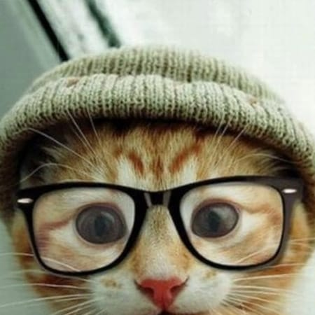 cat with glasses and hat