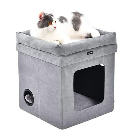 cat on house