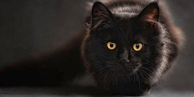 black cat names thumbnail