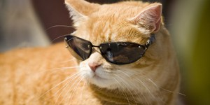 cool cat names - cat with sunglasses