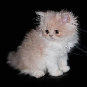 cute-kitty-1319509-m