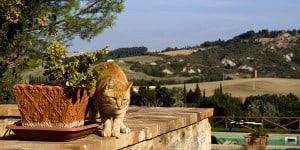 Italian-cat-names
