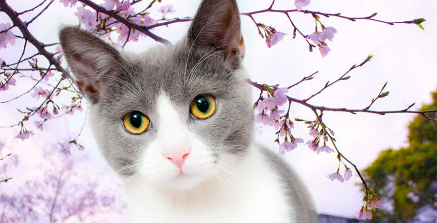 japanese cat with flowers