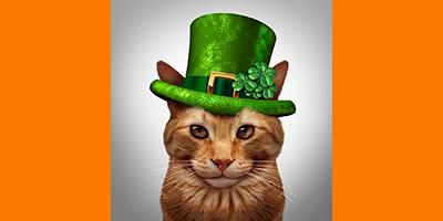 irish cat names thumb