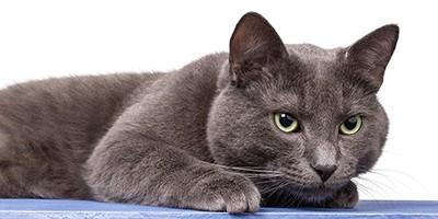 russian cat names thumb