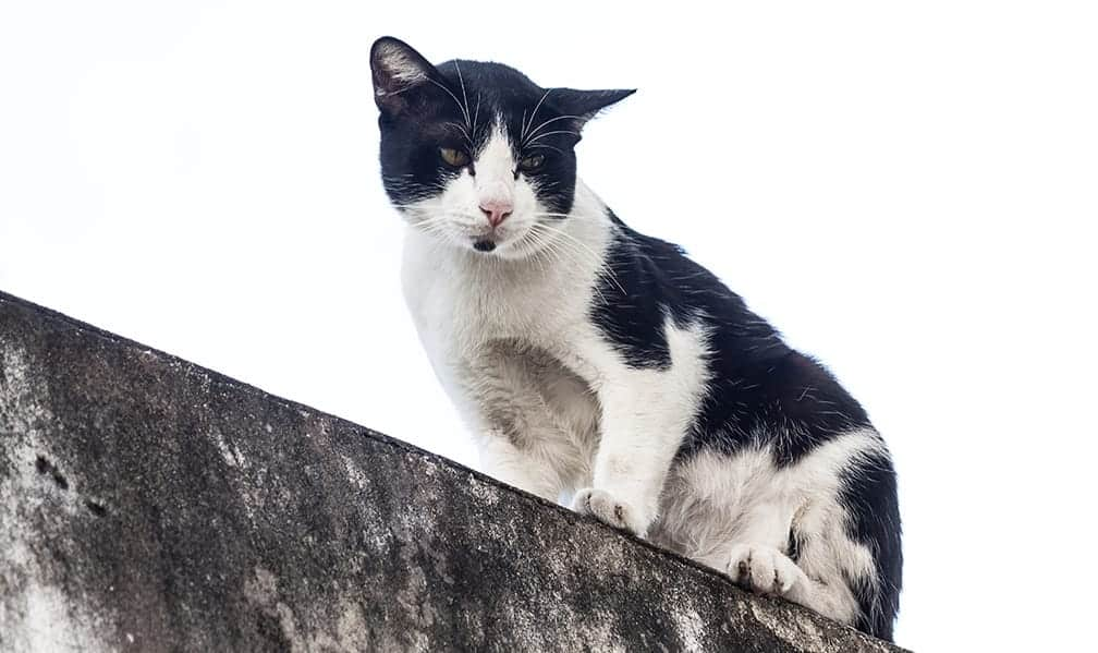 Black and white cat names