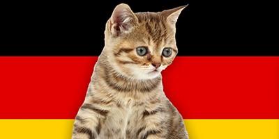 german cat names thumb