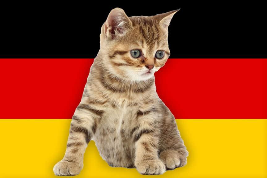 German Cat Names