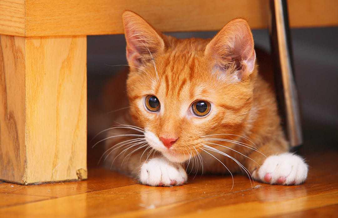 Ginger Cat Names