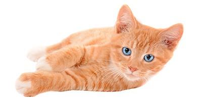 ginger cat names thumb