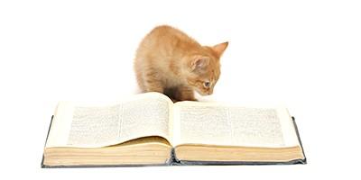 literary cat names thumb