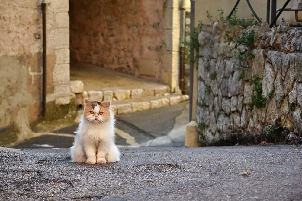Grumpy Cat Names