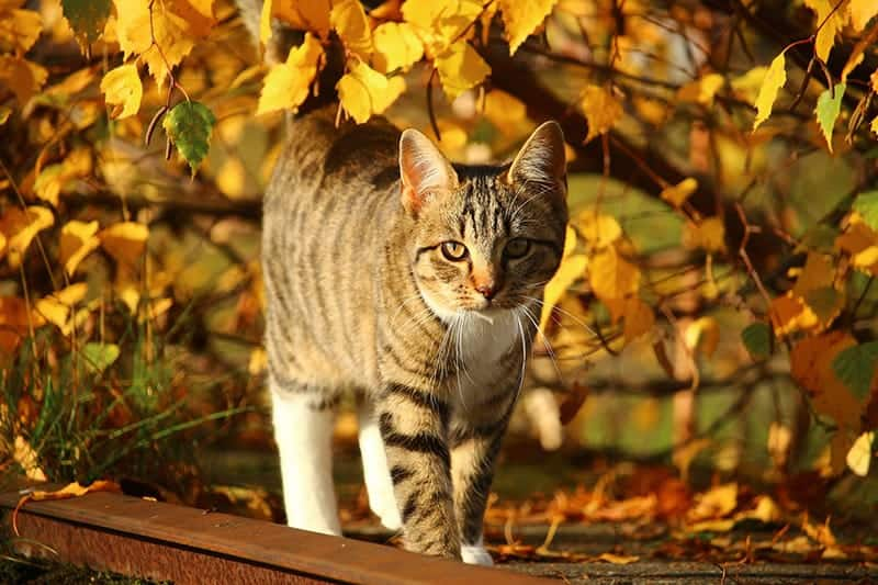 cat in the fall