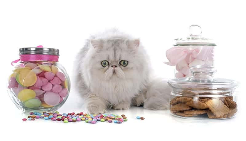 Cat with candy
