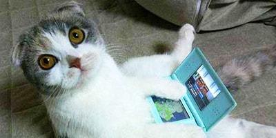 nerdy cat names thumbnail