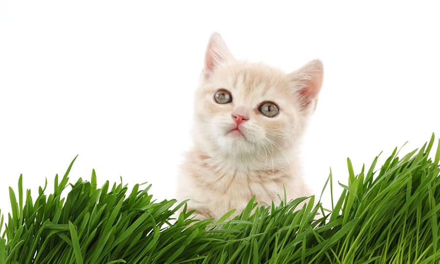 Unisex Cat Names - cat in grass