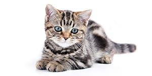 Unisex Cat Names sm