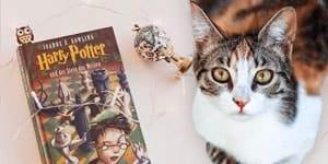harry potter cat names thumb