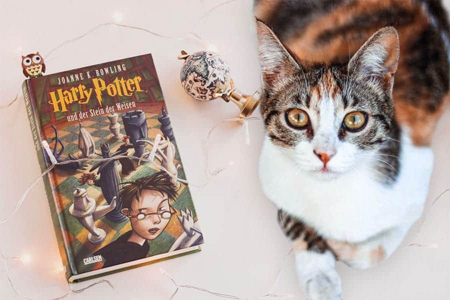 harry potter cat names - cat with book