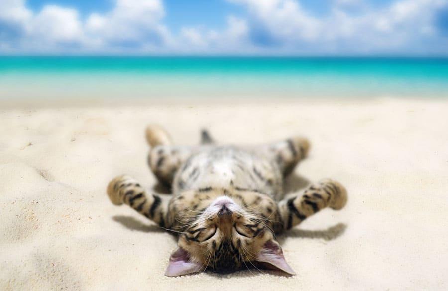 Hawaiian cat names - cat on beach