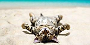 hawaiian cat names thumbnail