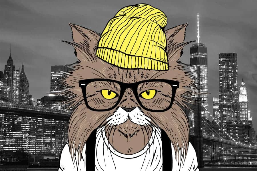 cool cat with hat and glasses