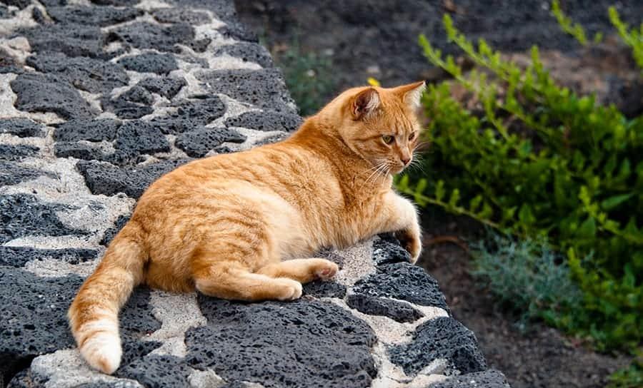 spanish cat names orange cat