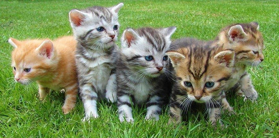 kittens group