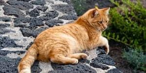 spanish cat names thumbnail