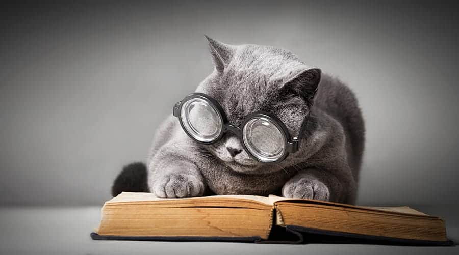 cat reading with glasses
