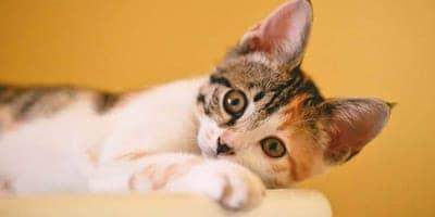 british cat names thumbnail
