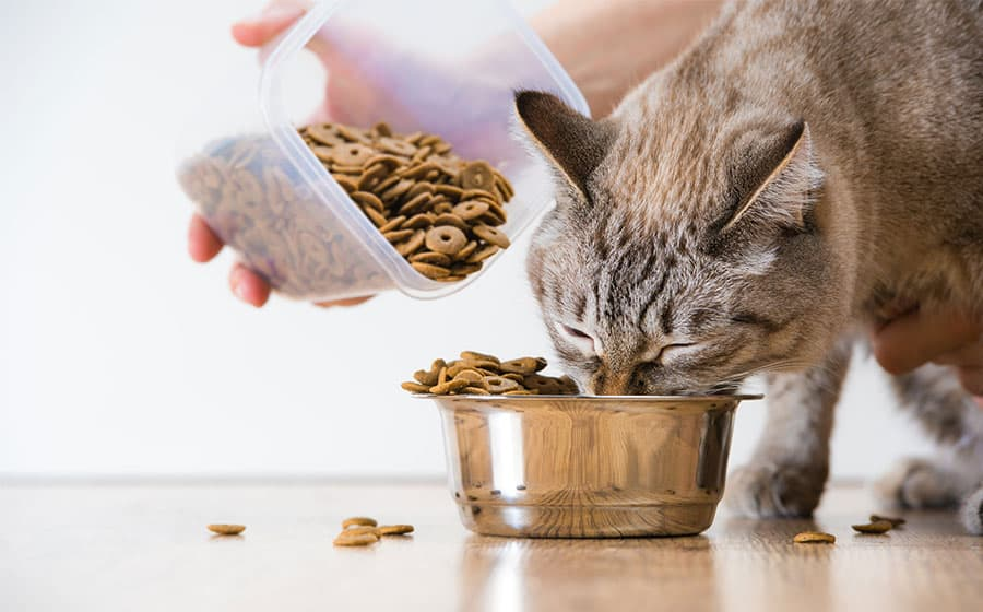 cat eating dry food out of bowl