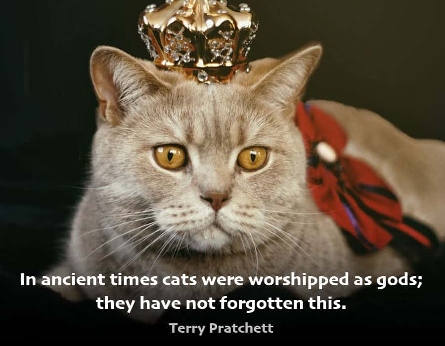 cat quote - in ancient times cats were worshipped as gods; they have not forgotten this - terry pratchett
