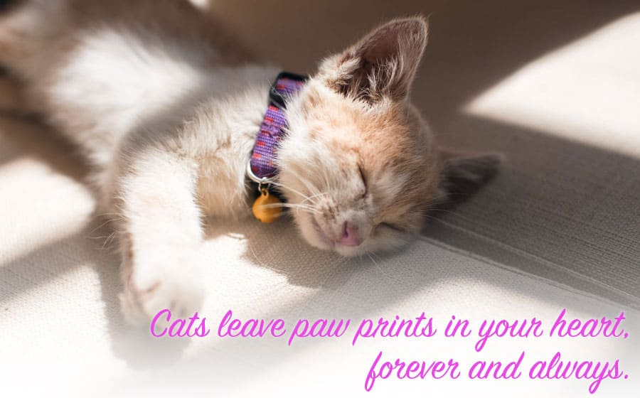 cat loss quotes - cats leave paw prints in your heart forever and always