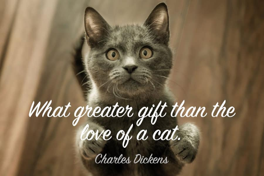 cat quotes - what greater gift than the love of a cat - charles dickens