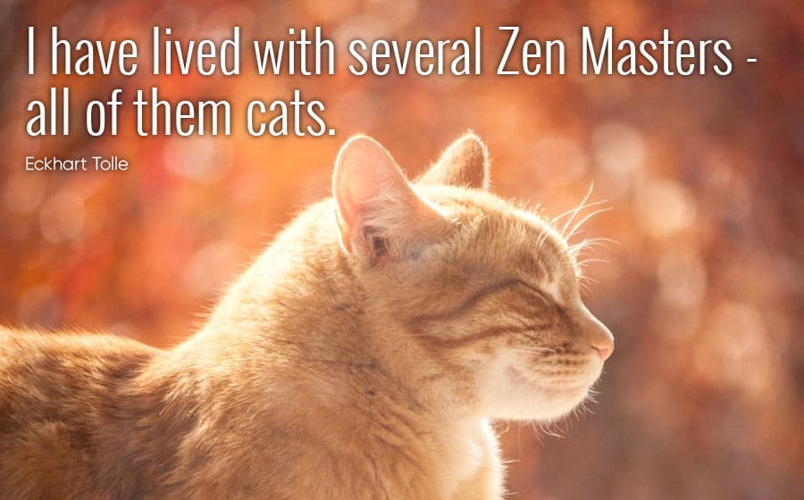 cat quotes - I have lived with several zen masters all of them cats - eckhart tolle
