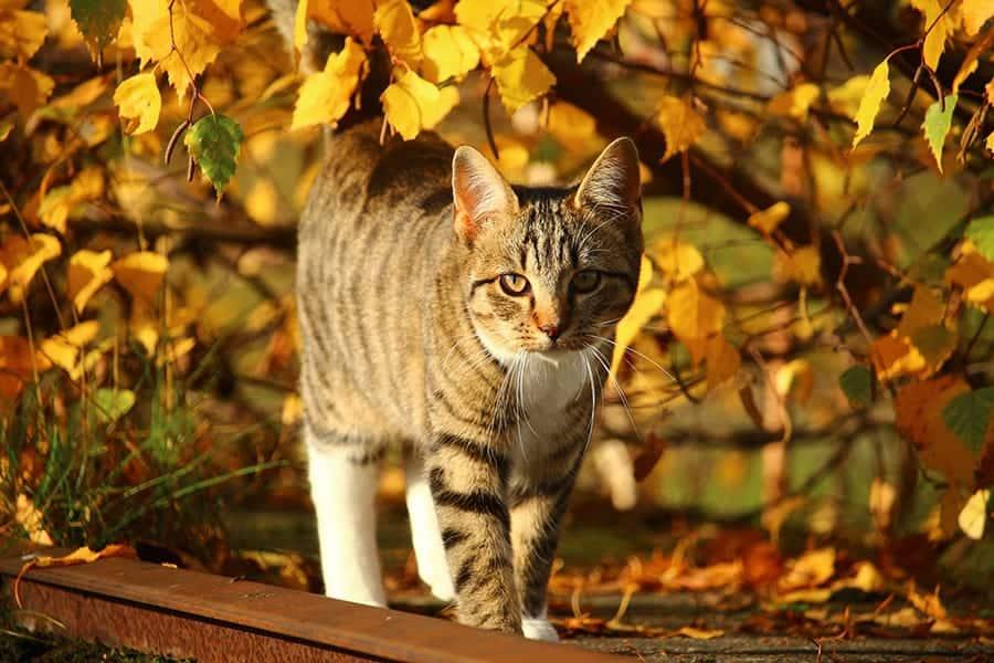 fall cat names