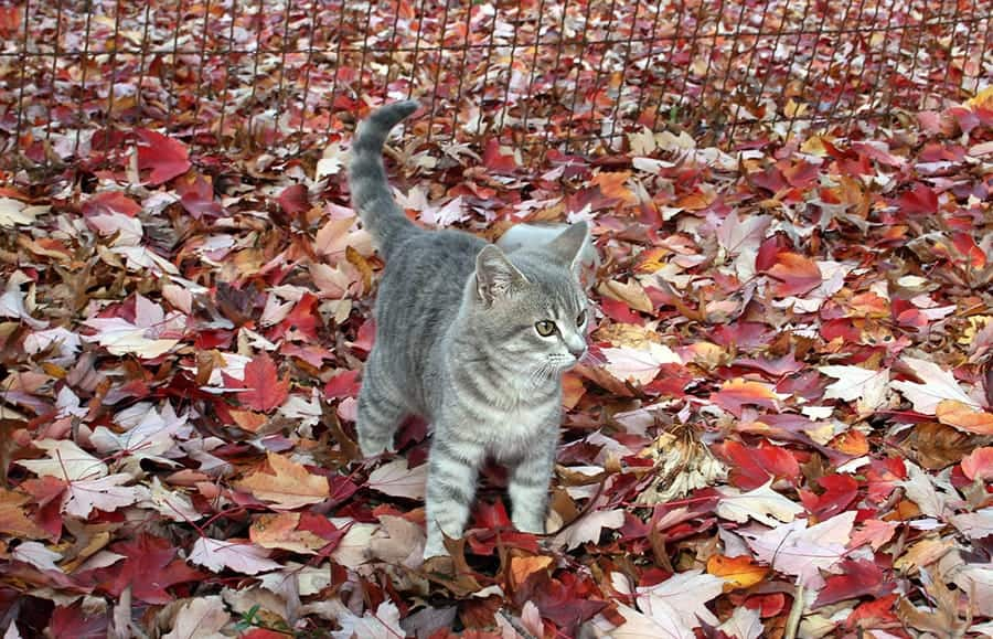 fall cat in leaves