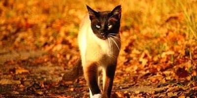 fall cat names thumbnail