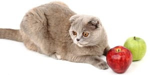 human foods that cats can eat thumbnail
