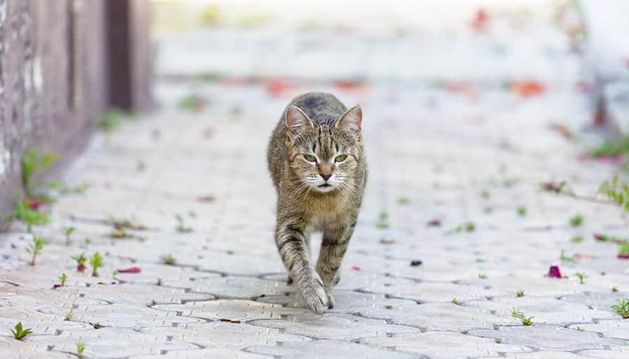 city cat walking