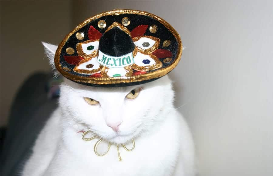 mexican cat names - cat in hat