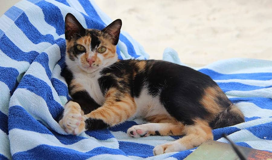 cat on beach towel