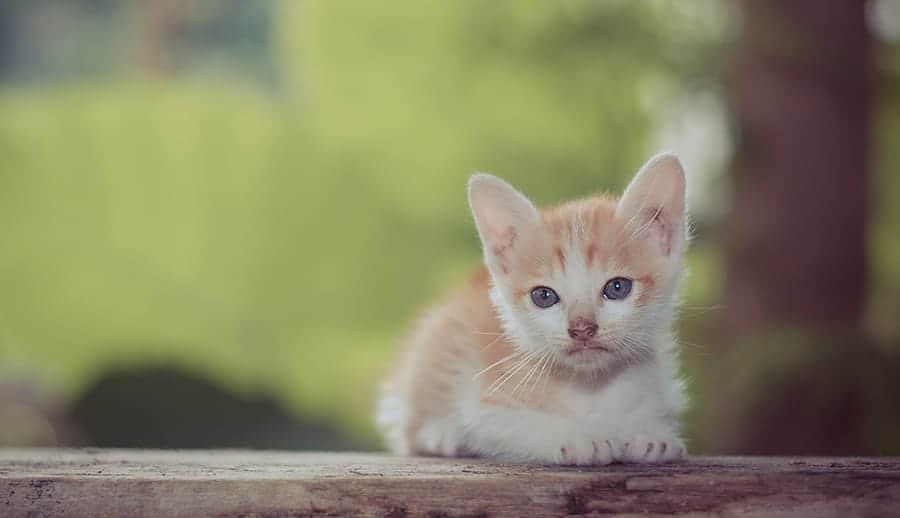 scottish cat names