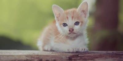 scottish cat names thumbnail