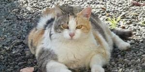 Fat cat names