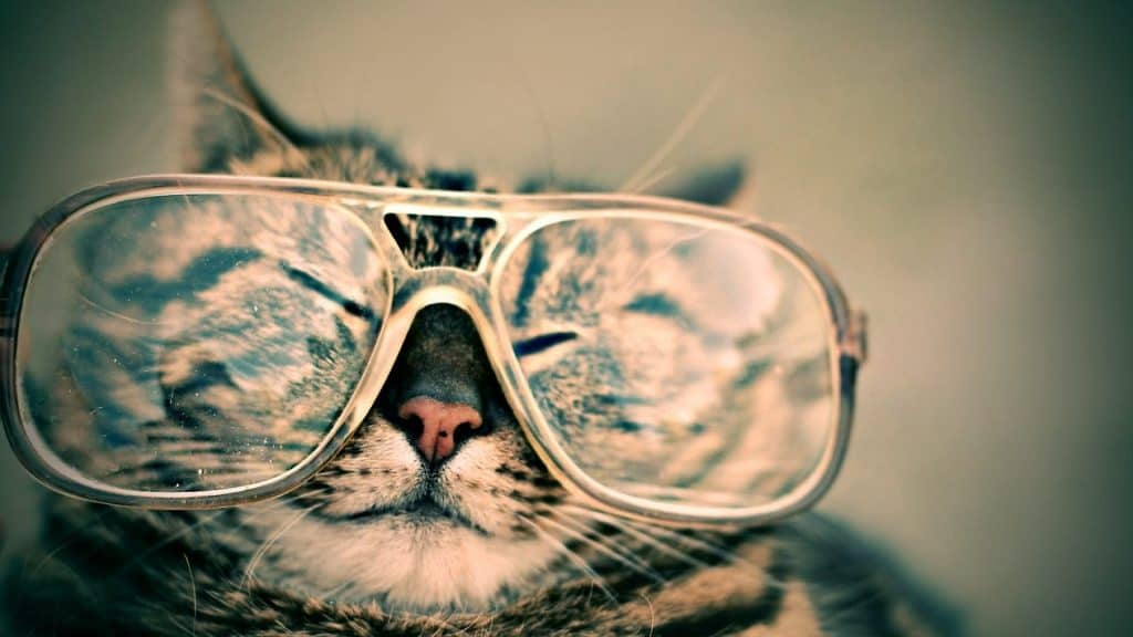 Hipster cat names - cat with sunglasses