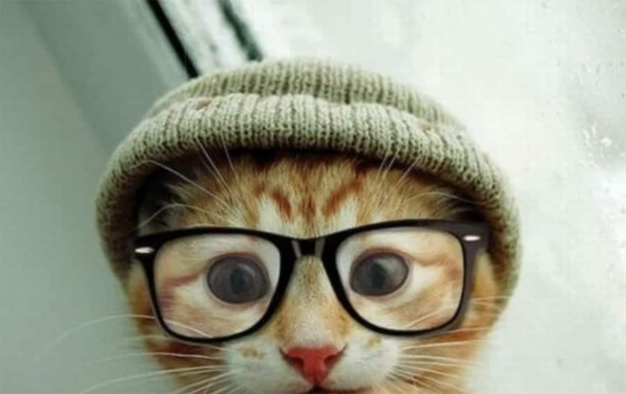 Cat with beanie and glasses