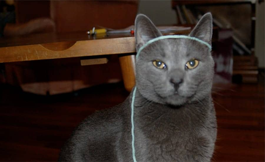 Stylish girl cat